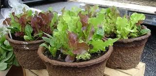 Vegetable Garden Bed Design by Garden Design Garden Design With How To Plant A Fall Vegetable