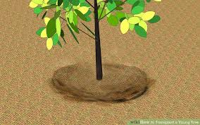 how to transplant a tree 9 steps with pictures wikihow
