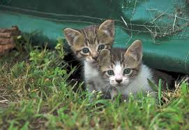 adopting a companion animal