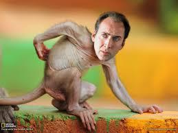 Sexy Monkey Meme - battle 68 baby macaque via last weeks winner sousvide