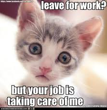 Sad Kitten Meme - 14 memes that are so true for cat people cuteness