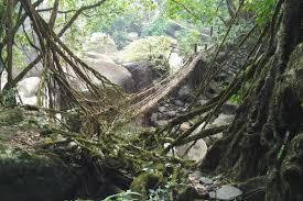 What Is Root Bridge Sai Mika Park U2013 Fledgling Travelers