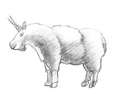 how to draw a mountain goat step by step
