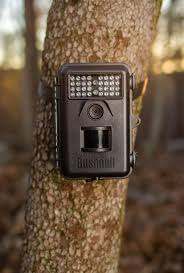 amazon com bushnell 6mp trophy cam essential trail camera with