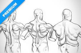 physique variations for the shoulder muscles proko