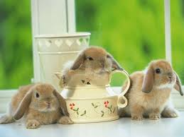 rabbit bunny 15 best the bunnies landed images on adorable