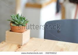 small potted plants small potted plants placed cafes beautiful stock photo 350705012