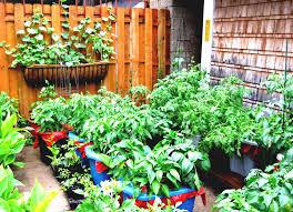 Flower Garden Ideas Beginners by Flower Garden Ideas Beginners For Backyard Goodhomez Com