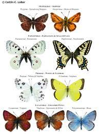 northwest butterflies naming lepidoptera