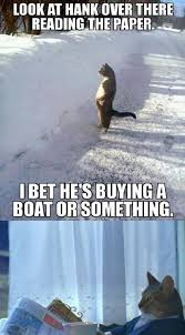 Newspaper Cat Meme - i should buy a boat cat trending images gallery know your meme