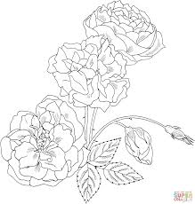 download coloring pages coloring pages roses coloring pages