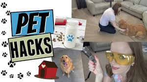 pet hacks how to keep your house clean with pets are you