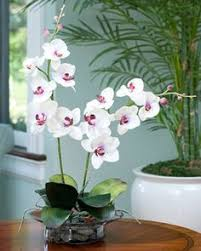 Orchid Centerpieces Everything You Need To Know About Caring For Your Orchid Plant