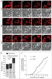 omcg1 depletion leads to a reduced proliferation arrest in