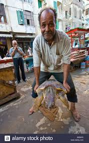 sea turtle for sale as food in a bazaar in alexandria egypt stock