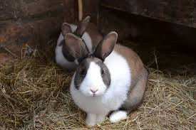 the easy low cost rabbit feed you can grow at home off the grid news