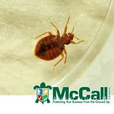 Kill Bed Bugs Fire And Ice What Kills Bed Bugs