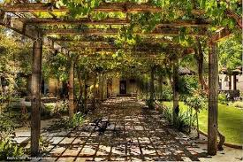 backyard grape trellis exterior bliss