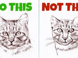 draw sketching animals how to draw a realistic cat how to draw
