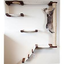 cat wall furniture amazon com catastrophicreations cat mod climb track handcrafted