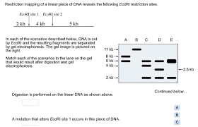 dna mapping restriction mapping of a linear of dna revea chegg com