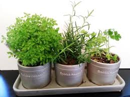 best indoor herb garden hanging indoor herb garden image of home