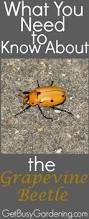 334 best bugs bugs good u0026 bad images on pinterest garden