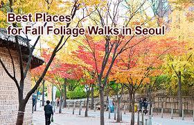 walks seoul 서울 korea