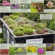 Roof Garden Plants Green Roof An Englishman U0027s Garden Adventures