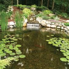 Decorative Pond Water Garden Supplies Fish Pond Supplies The Pond Guy