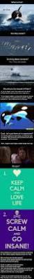 My Toxic Baby Documentary Watch Best 25 Blackfish Documentary Ideas On Pinterest Blackfish