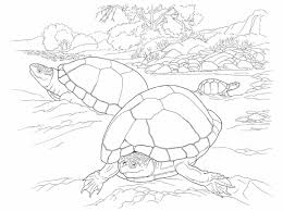 coloring page turtle free turtle coloring pages printable printable turtle coloring