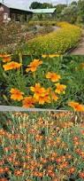 arbuste feuillage pourpre persistant les 25 meilleures idées de la catégorie plantes à feuillage sur