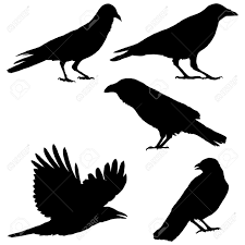 raven stock photos royalty free raven images and pictures