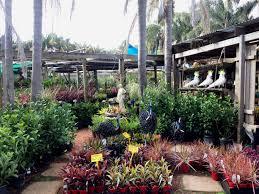 native plant nursery sydney new leaf nursery sustainable plants and children u0027s petting zoo