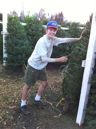 where to buy your christmas tree in davis and woodland davis