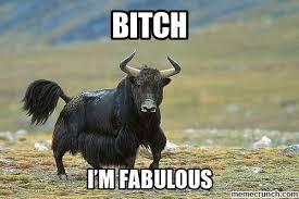 i m fabulous yak