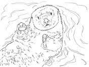 sea otter coloring otters category select 20946