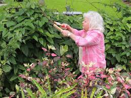 plants that keep mosquitoes away edible plants that repel mosquitoes net effect