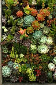 wish i knew the name of every one of these succulents so i could