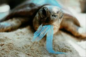 these 5 marine animals are dying because of our plastic trash