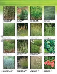 54 best grasses images on ornamental grasses plants