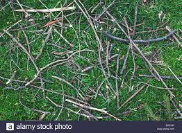 ground textures ground textures grass and wooden branches stock photo royalty
