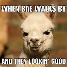 Alpaca Meme - insert alpaca emoji alpaca memes instagram photos and videos