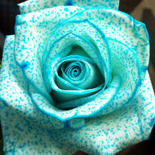 teal roses partytipz entertaining with style and ease