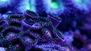 223388 color wallpapers underwater coral sea life art ocean