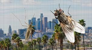 Glass Shower Doors Los Angeles by Window Screens U0026 Doors Mirrors U0026 Glass U2013 Los Angeles