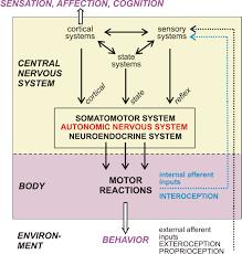 Nervous System Concept Map Wilfrid Jänig
