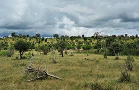 botswana safari falls floodplains u0026 island art safari