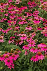 native washington plants 45 best old washington plant list images on pinterest front